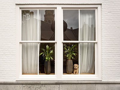 closeup of house window from the outside, with plants, curtains, and puppy looking outside